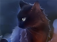 Warrior Cats Quiz